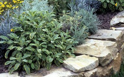 Ogrody A&J roślinność