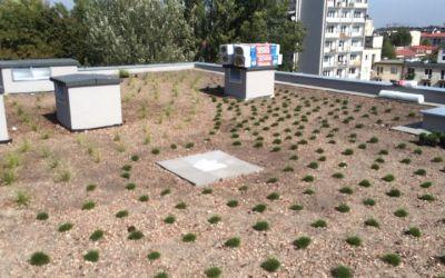 OGRODY A&J dach zielony
